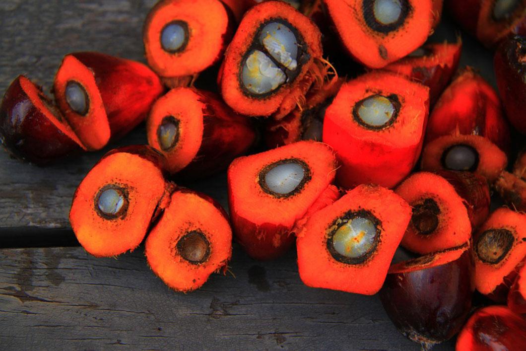 Les fruits du palmier à huile