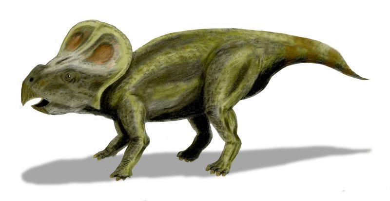 Un protocératops