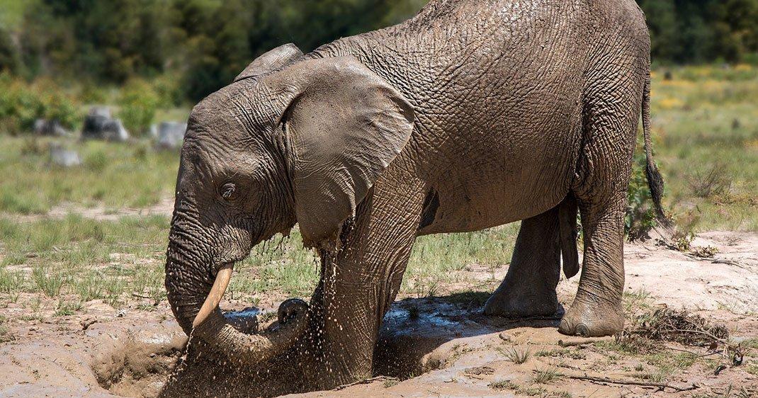 une-chine-elephant-ivoire