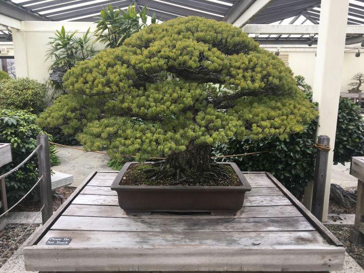 yamaki-pin-blanc