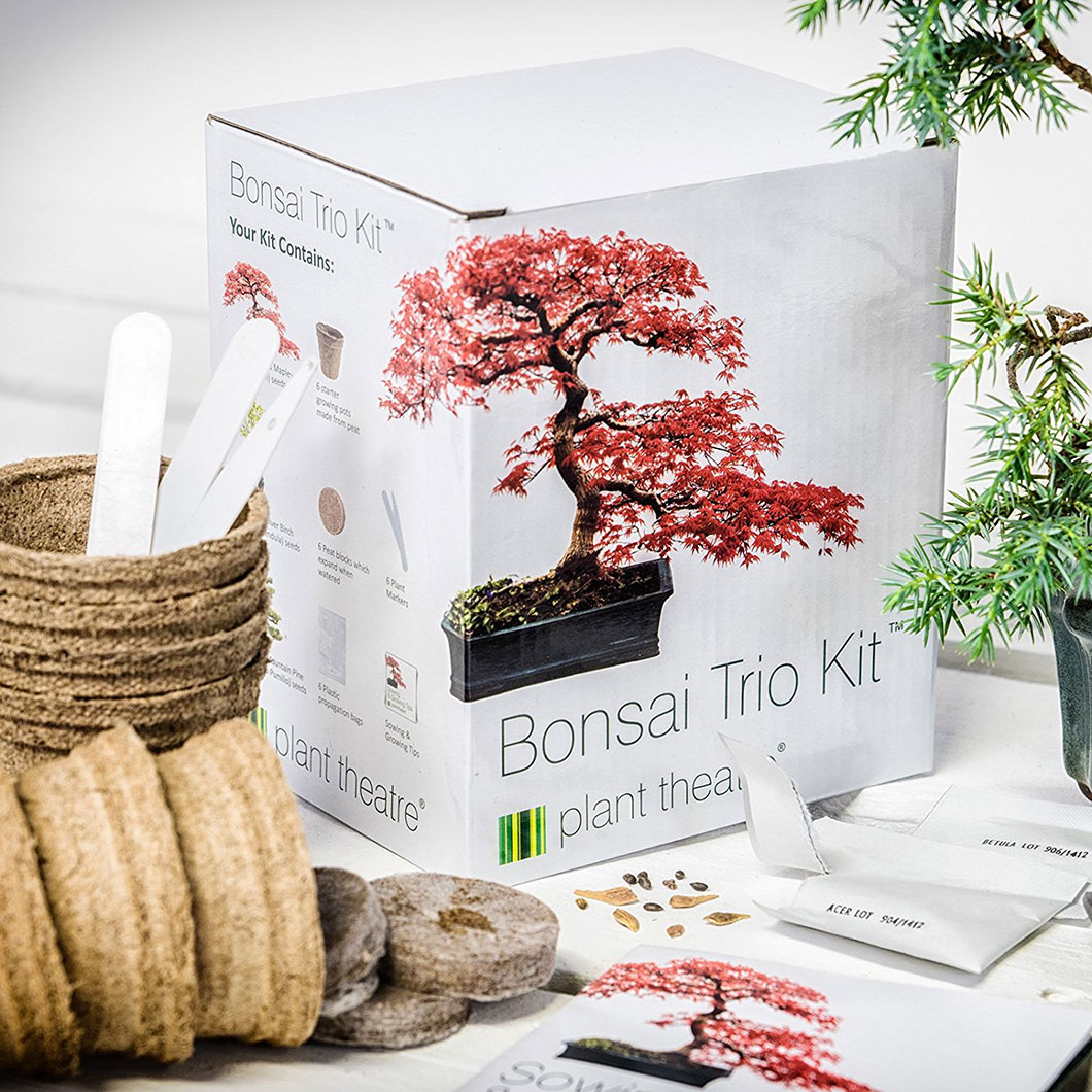 kit-bonsai