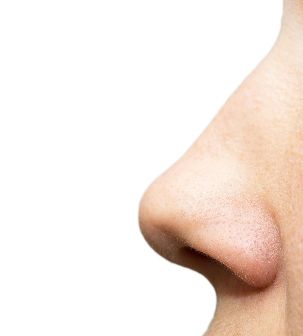 Cet organe est situé dans le nez via Depositphotos