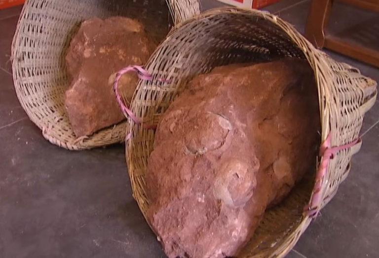 Ces oeufs de dinosaures retrouvés sur un chantier ont plus de 70 millions d'années ! Par Justine Manchuelle                           Oeufs-dinosaure-bloc-768x524