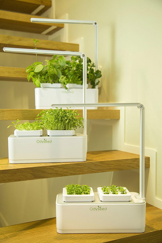 cultivez vos propres herbes aromatiques facilement et sans aucun engrais avec ce potager d. Black Bedroom Furniture Sets. Home Design Ideas
