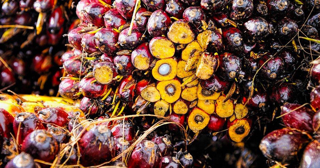quiz avez vous conscience de l impact de la production d huile de palme sur l environnement. Black Bedroom Furniture Sets. Home Design Ideas
