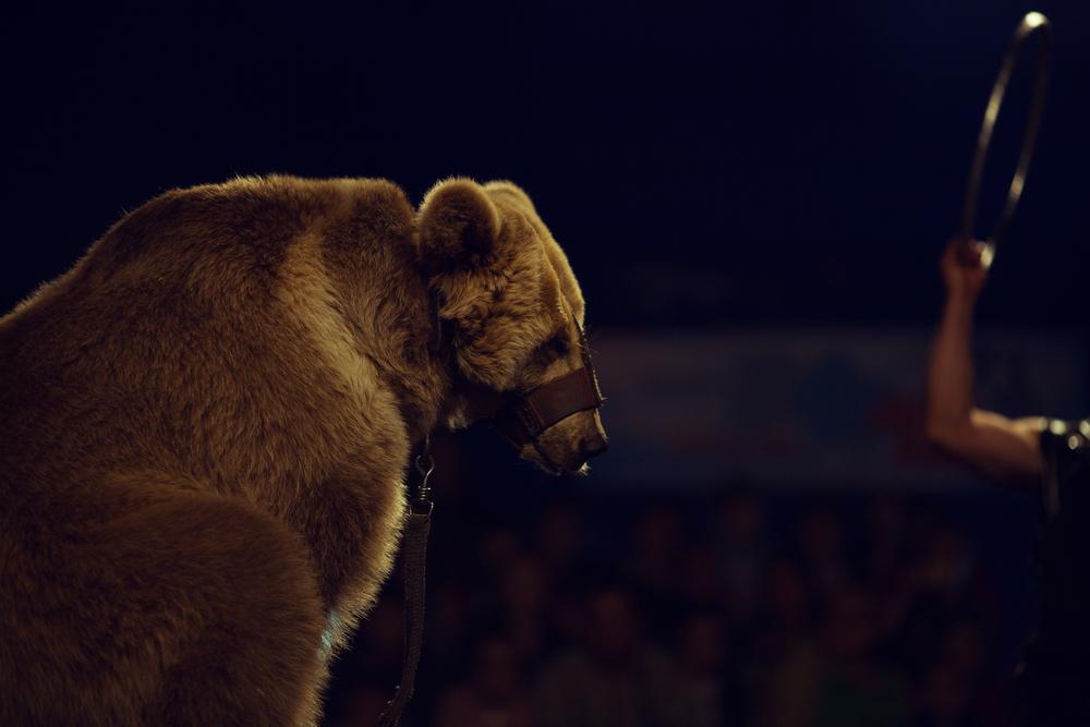 ours-cirque