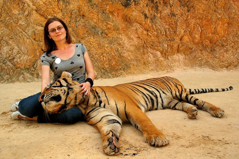 tigre-photo-touriste