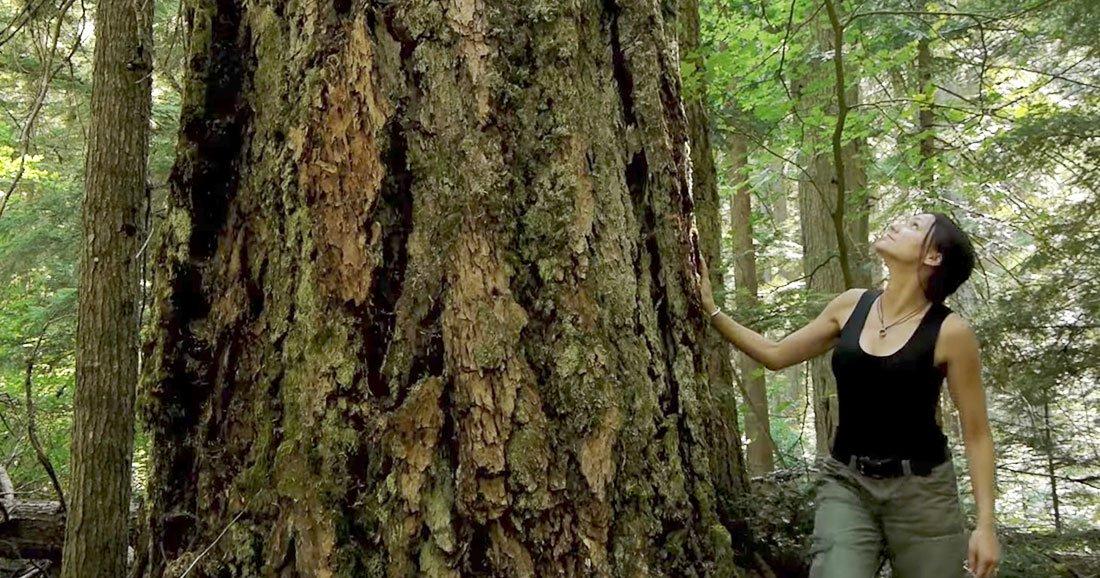 fascinant d couvrez comment les arbres se transmettent des ressources entre eux. Black Bedroom Furniture Sets. Home Design Ideas