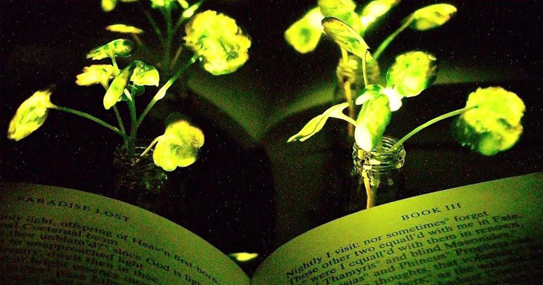 De v ritables plantes lumineuses claireront bient t nos for Plante lumineuse