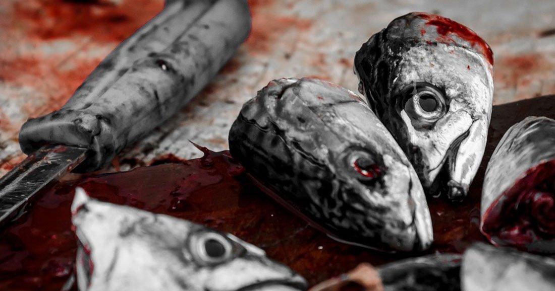 Le Parlement européen demande l'interdiction de la pêche électrique en Europe