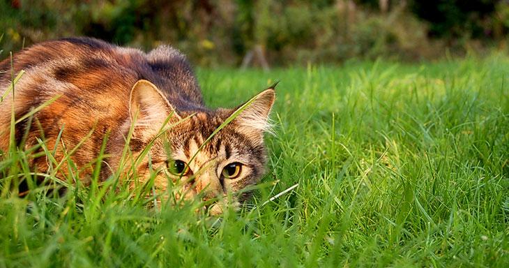 Si votre chat est si agile, c'est parce qu'il comprend très bien les lois physiques de base ! 1