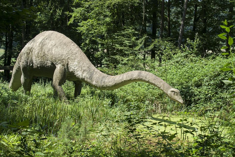 5 informations méconnues mais fascinantes à propos des dinosaures ! Par Thomas Le Moing                           Dino-herbivore