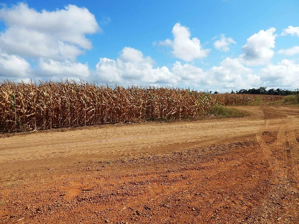 Une plantation d'OGM en Amazonie