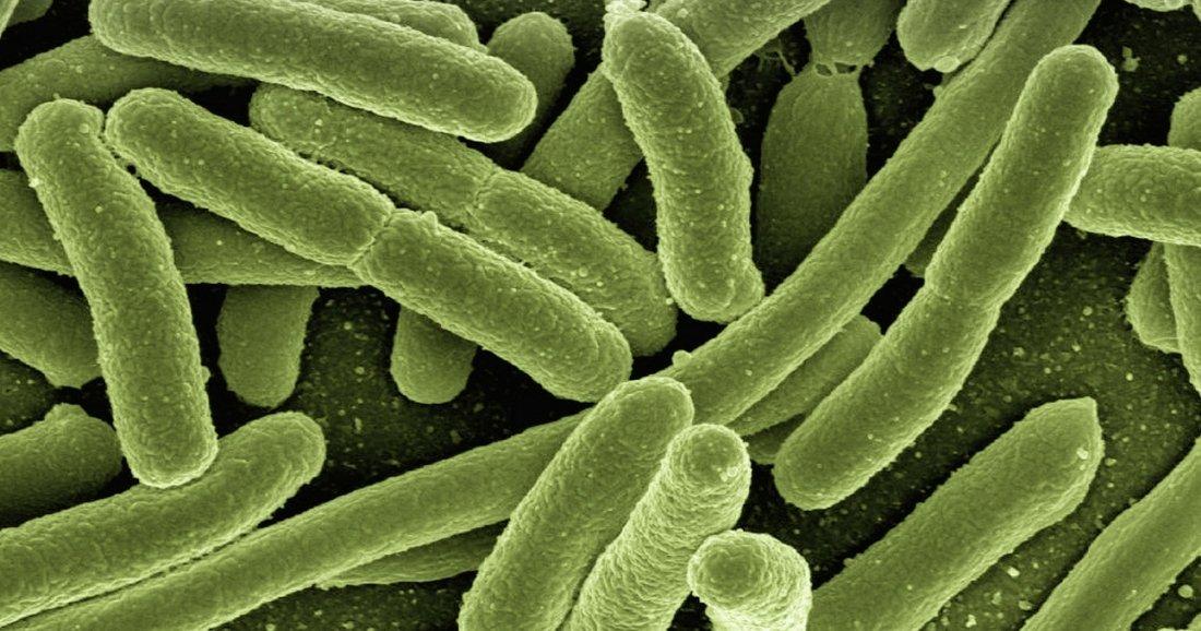 La découverte de bactéries dans notre cerveau révolutionne nos connaissances de la biologie humaine