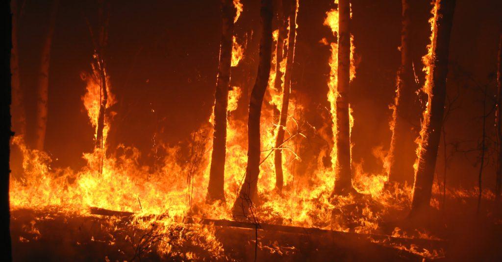 Ce gel pourrait protéger les arbres face à la menace grandissante des feux de forêt