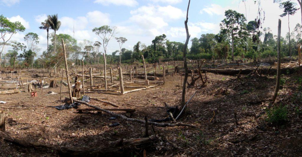 Cet Indien d'Amazonie protégeait sa forêt : il a été lâchement tué par des trafiquants de bois