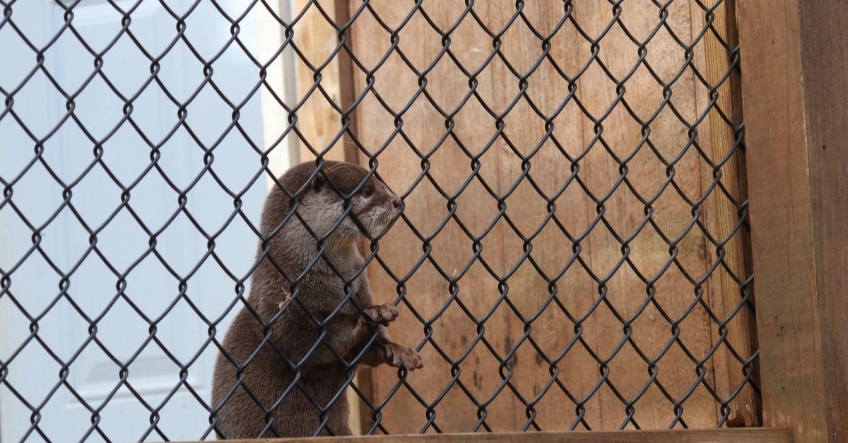 De plus en plus d'animaux sauvages sont victimes d'un trafic ignoble sur les réseaux sociaux