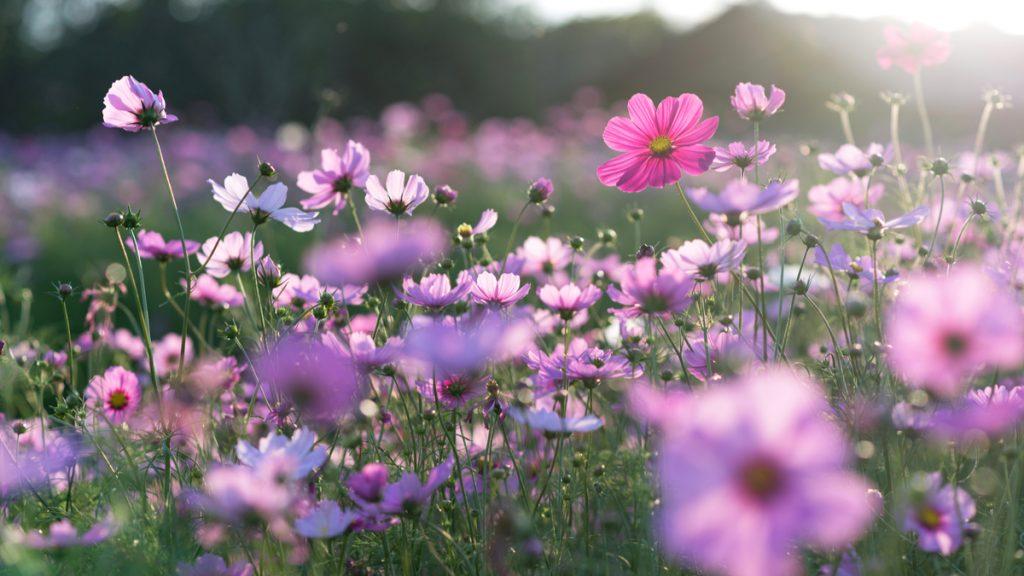 Les fleurs sauvages sont en train de renaître grâce au ...