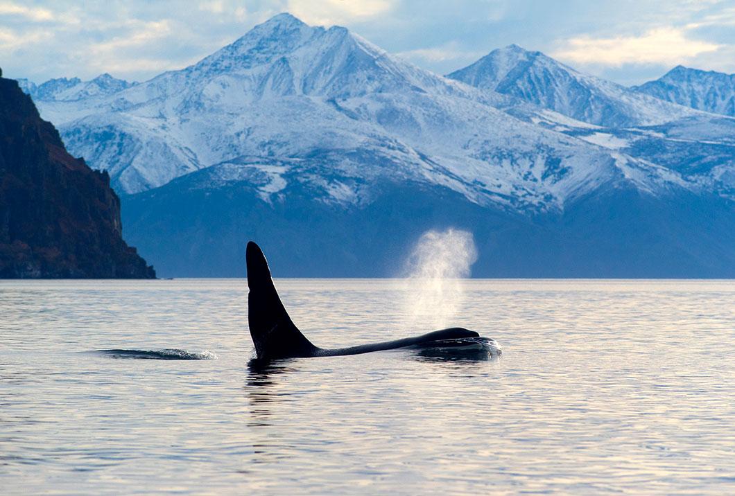 Une orque