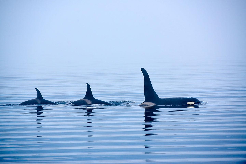 Des orques via Deposit Files
