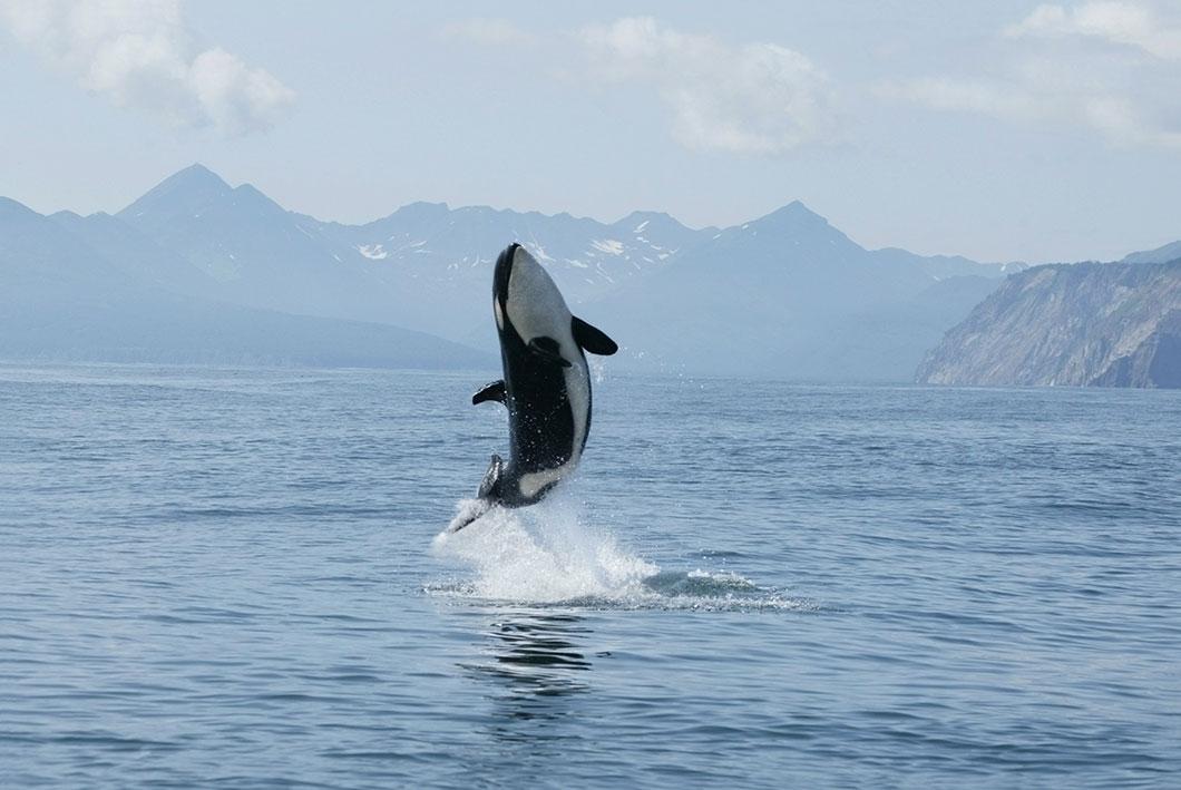 Une orque via Deposit Files