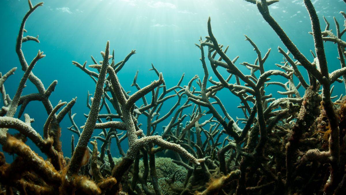 La plus grande extinction de masse a impacté les océans dix fois plus rapidement que les continents