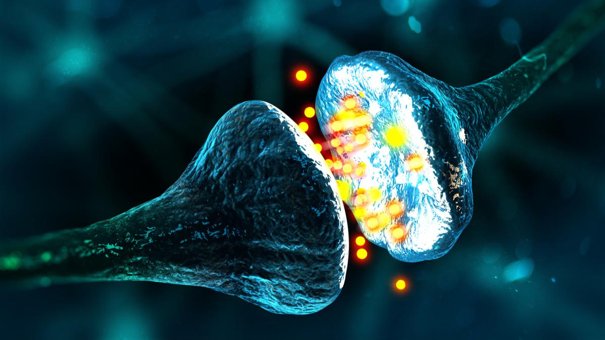 """une étude révèle le """"talon d'Achille"""" de la dégénérescence synaptique"""