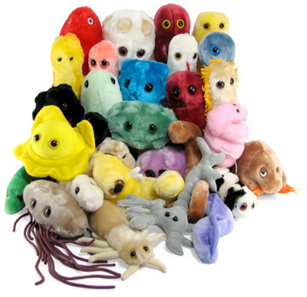 bactérie-peluches