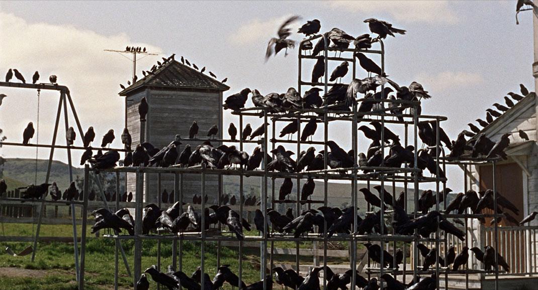 23.-les-oiseaux-the-birds-alfred-hitchcock-1963