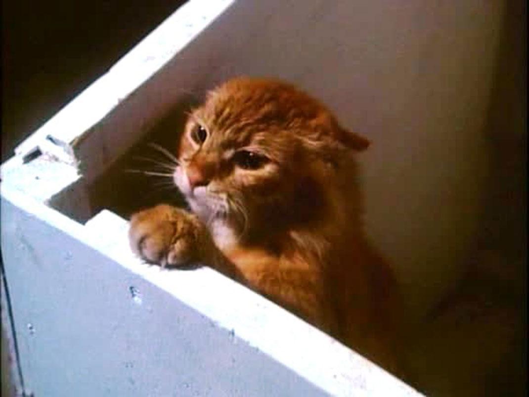un-cat