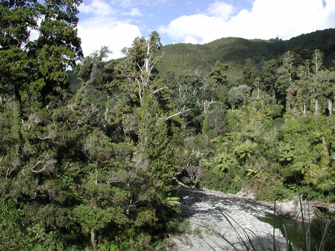 Hutt_River_from_flume_bridge,_Kaitoke
