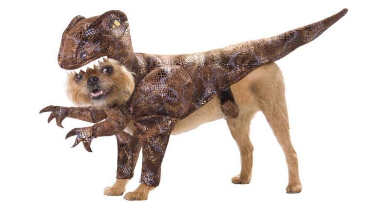 animaux-déguisements