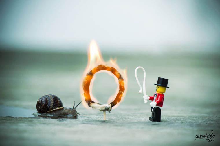 escargot-cirque-samsofy