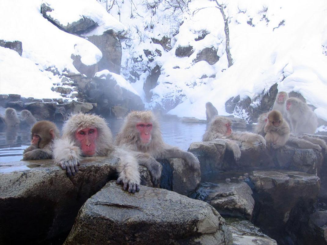 ls-onsen-monkey