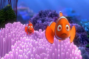 nemo-corail