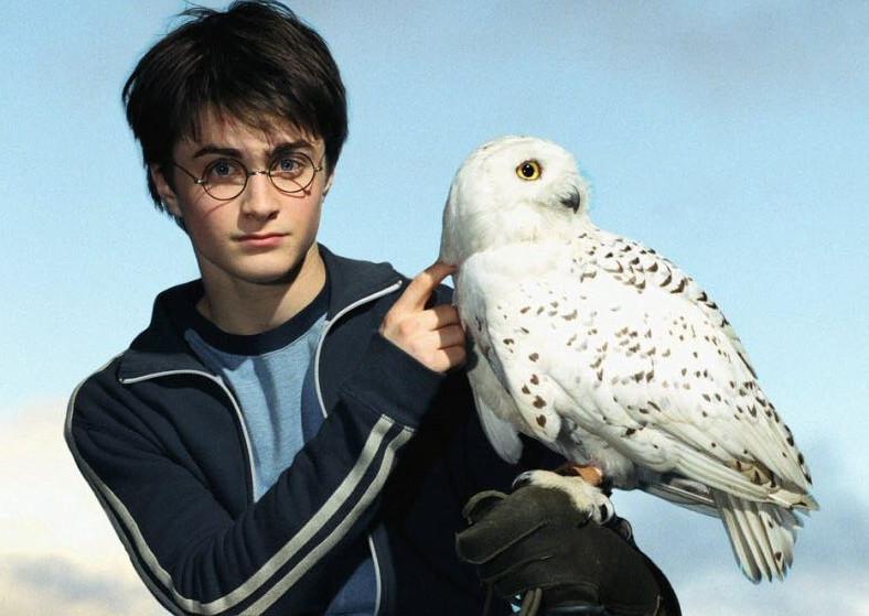 Harry-Hedwige