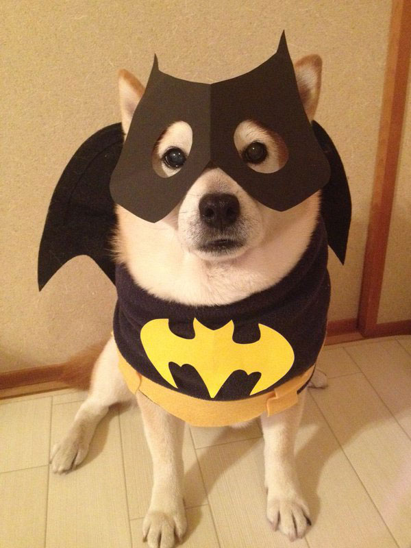 chien-cosplayeur-batman
