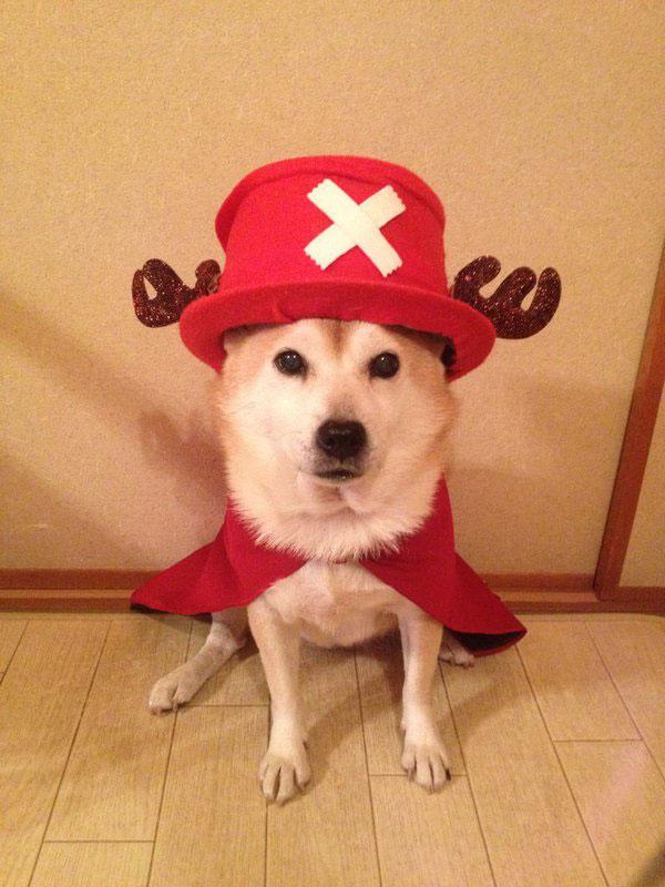 chien-cosplayeur-chopper