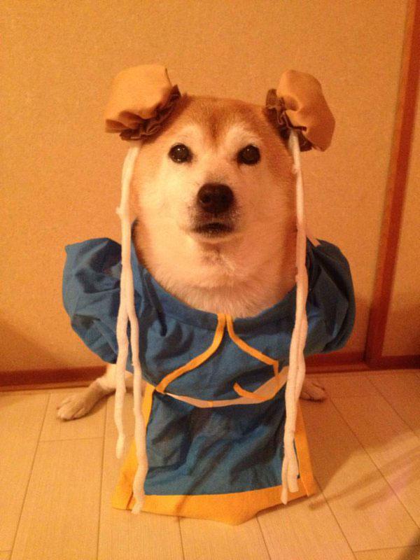 chien-cosplayeur-chun-li