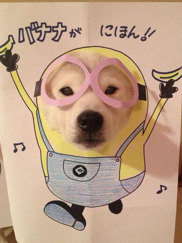 chien-cosplayeur-minion