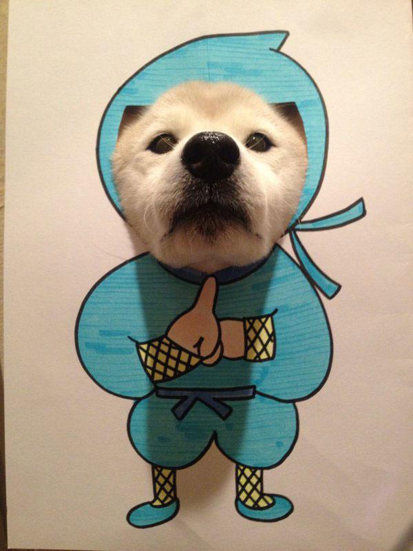 chien-cosplayeur-ninja