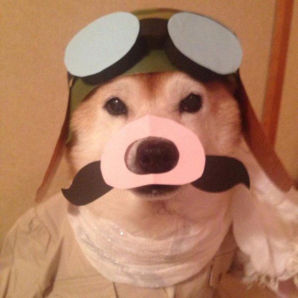 chien-cosplayeur-porco-rosso