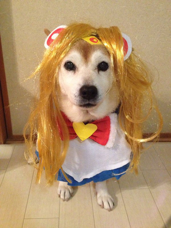 chien-cosplayeur-sailor-moon