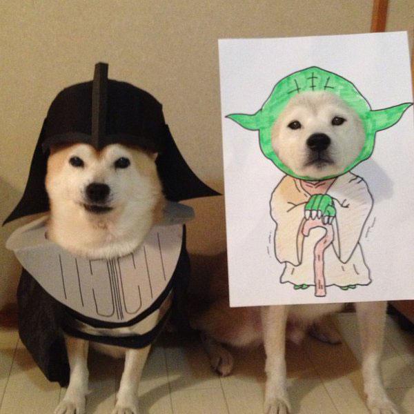 chien-cosplayeur-star-wars