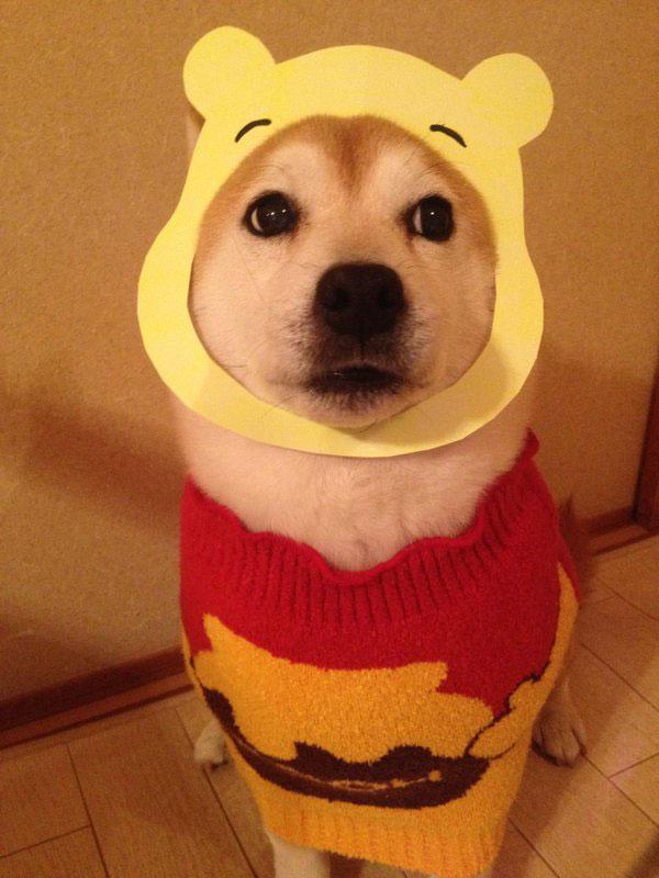 chien-cosplayeur-winnie-ourson