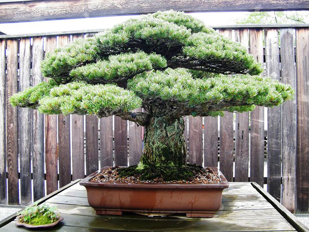 ls-bonsai-hiroshima
