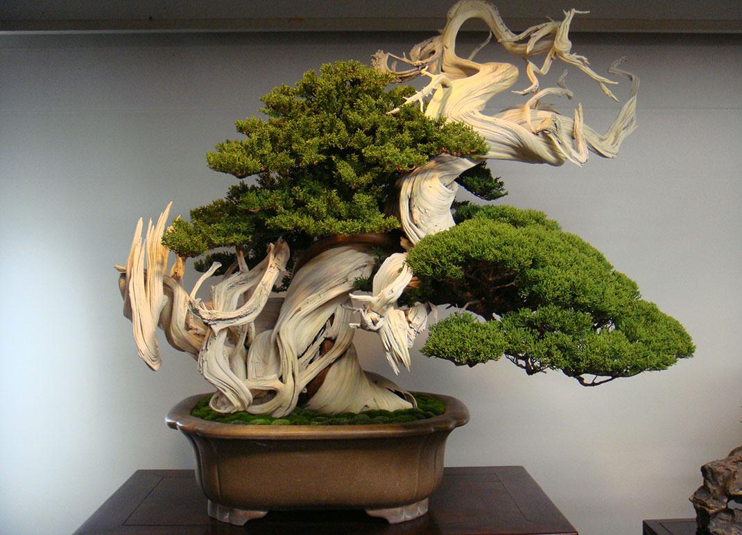 ls-bonsai-oldest