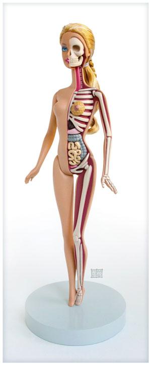 anatomie-barbie