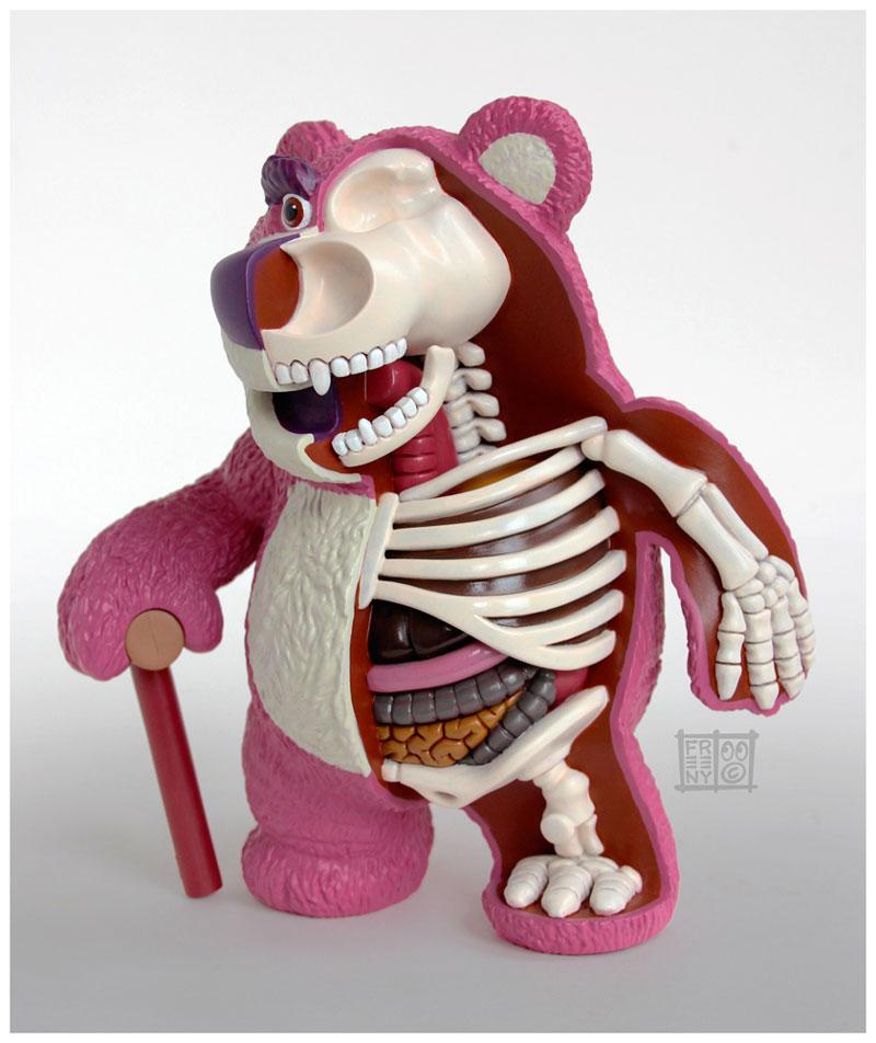 anatomie-lotso
