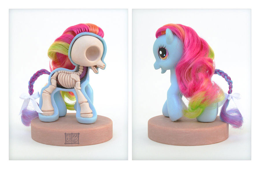 anatomie-poney